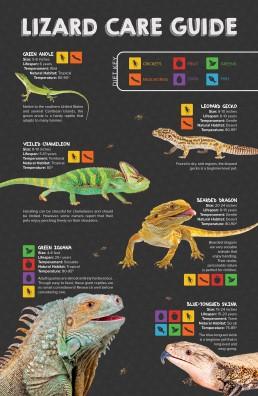 Lizard Infographic