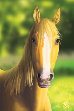 palomino-horse-illustration